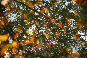 15 leaves_