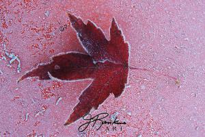 2 leaves_