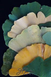 4 leaves-2