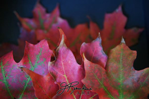 5 leaves_