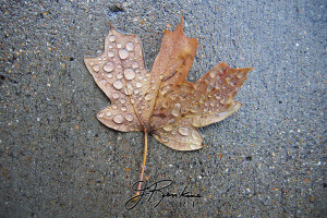 8 leaves_