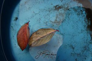 9 leaves_